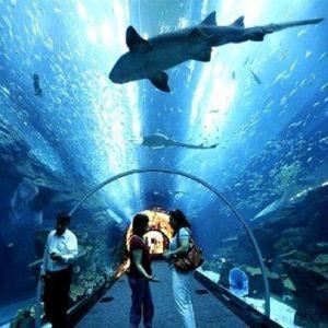 Подводный мир Лангкави или океанариум Лангкави