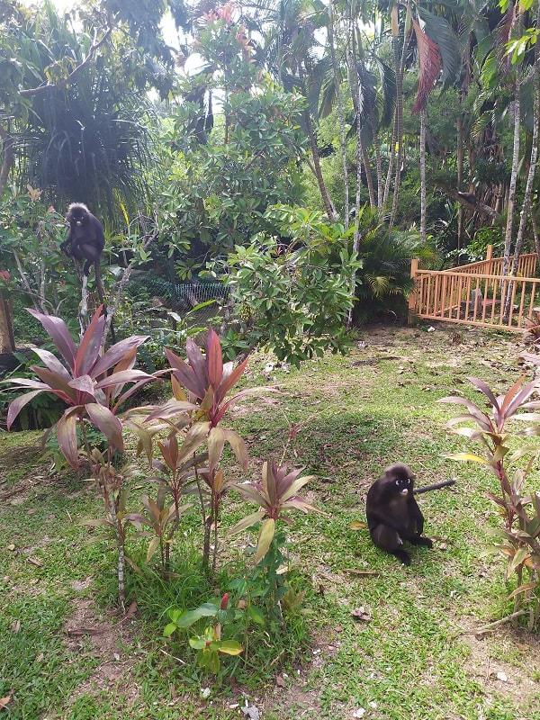 Лангкави где найти обезьян