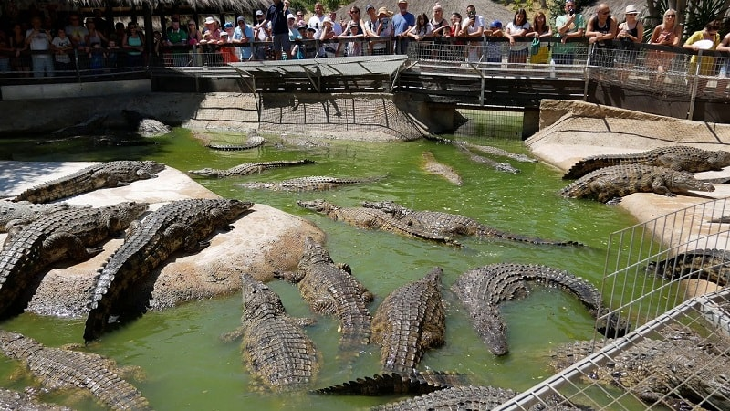 ферма крокодилов на Лангкави