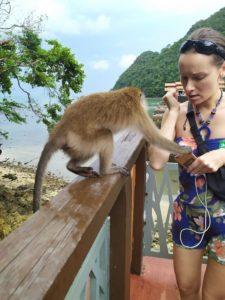 обезьяны Лангкави где