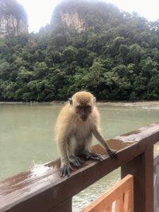 обезьяны на озере беременной девы