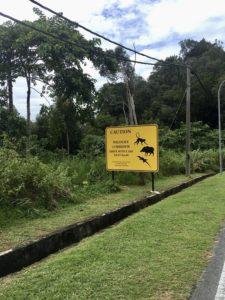 обезьяны и вараны на Лангкави