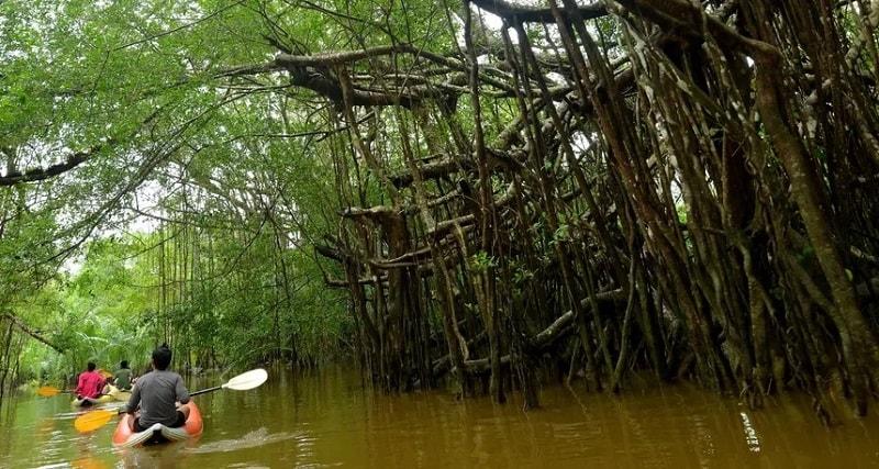 экскурсия по мангровму лесу