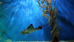 океанариум Лангкави что посмотреть